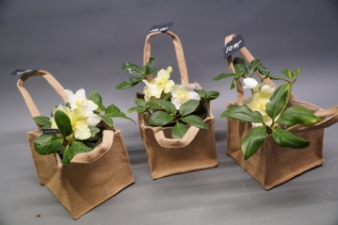 Millers plant gift bag